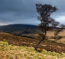 The Cheviot & The Tree. Northumberland. UK by David Lewins