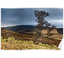 The Cheviot & The Tree. Northumberland. UK Poster
