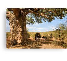 """""""Two Giants - together"""" - African elephants under Baobab tree - Kruger Nat. park - SA Canvas Print"""