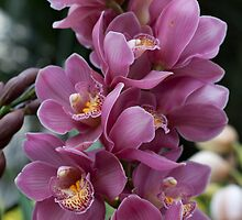 A Bouquet of Orchids by Sherry Hallemeier