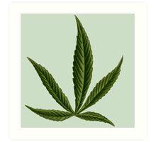 Cannabis #8 Art Print