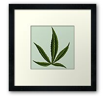 Cannabis #8 Framed Print