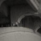 'Pigeons' by Luke Weinel