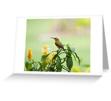 Mellow Yellow - sunbird Greeting Card
