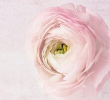 romantique by lucyliu
