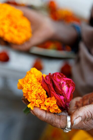 Marigolds and Roses, Bijaipur by nekineko