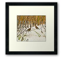 DOVES IN THE DUNE Framed Print