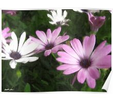 Purple and White Daisies 1 Painterly Poster