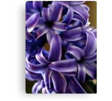 Purple Hyacinth Macro Canvas Print