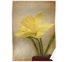 Daffodil for Mother Poster