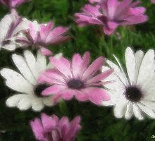 Purple and White Daisies 2 Watercolor by Christopher Johnson