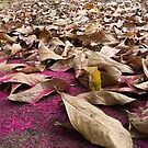 Pink Stamens, Ecuador by Chid Gilovitz