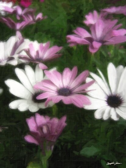 Purple and White Daisies 3 Painterly by Christopher Johnson
