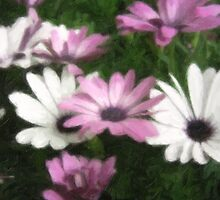 Purple and White Daisies 3 Pastel by Christopher Johnson