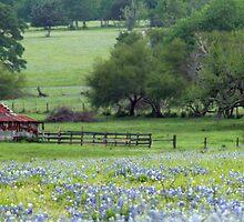 Oh Sweet Texas by luckylarue