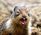 NO! YOU ARE NUTS!  by Alex Preiss