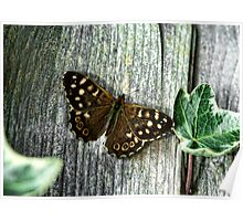 Common Brown Poster