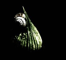 Garlic and snails.. by Berns