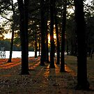 Sunset Perspective in the Pines by Paul Gitto