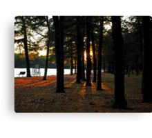 Sunset Perspective in the Pines Canvas Print