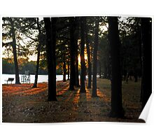 Sunset Perspective in the Pines Poster
