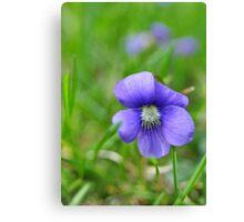 violets 1 Canvas Print
