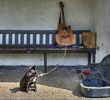 The Busker's Dog by Jamie  Green