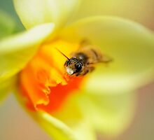 It Just Wouldn't Bee Spring Without ...  by Lois  Bryan