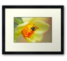 It Just Wouldn't Bee Spring Without ...  Framed Print