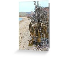 Brush Above the River Greeting Card