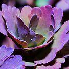 Purple... by Brian Dodd