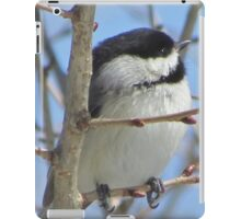 Cute chickadee sits on a branch in early spring iPad Case/Skin