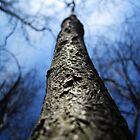 wild woods by paulmoodyy