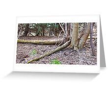 Fallen Trees Greeting Card