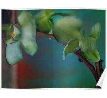 Orchid at the Edge of Night Poster