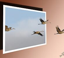 Sandhill Cranes by DigitallyStill