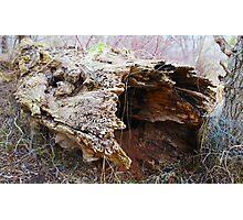 Fallen Rotting Log Photographic Print