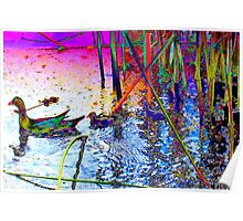 Stained glass moorhens Poster