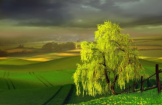 Green Beginning by Igor Zenin