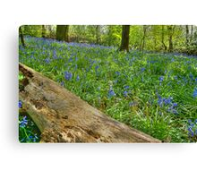 Whalley Wood Bluebells Canvas Print