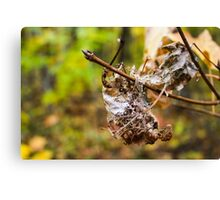 Dead Leaves Canvas Print