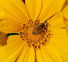 Bee by Jason Dymock Photography