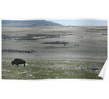 Buffalo Grazing with Horsemen Poster