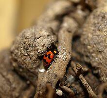 Lady beetle by Jason Dymock Photography