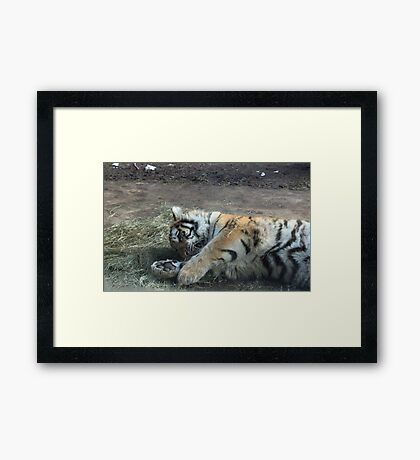 Kitty Playing Framed Print