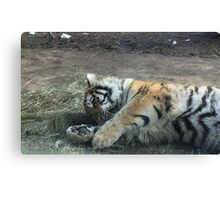 Kitty Playing Canvas Print