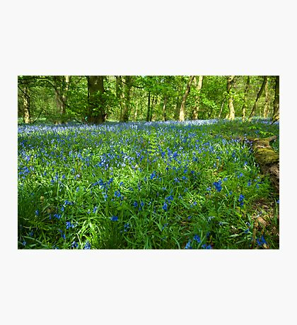 Spring Wood Photographic Print