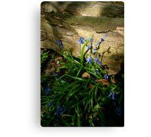 Sunlit Bluebells Canvas Print