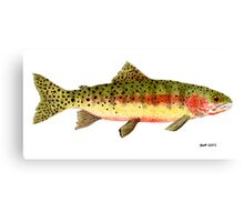 Study of a Greenback Cutthroat Trout Canvas Print