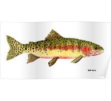 Study of a Greenback Cutthroat Trout Poster